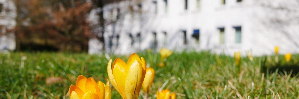 Vilmarhaus und Blumen (Slider)